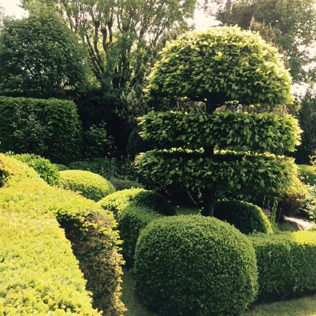 geschoren hagen in vormen