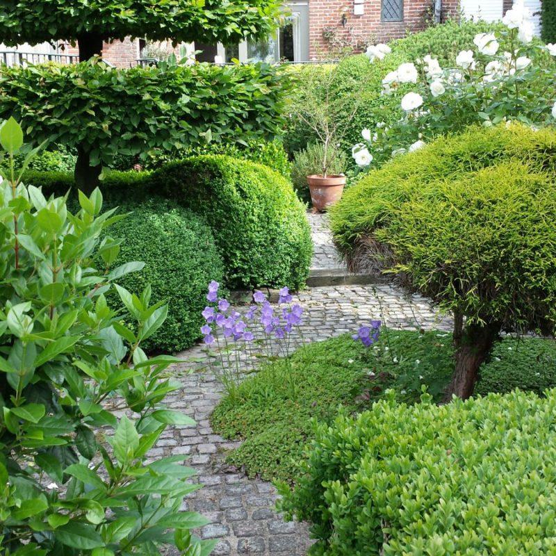 hagen die geschoren zijn door tuinonderhoud