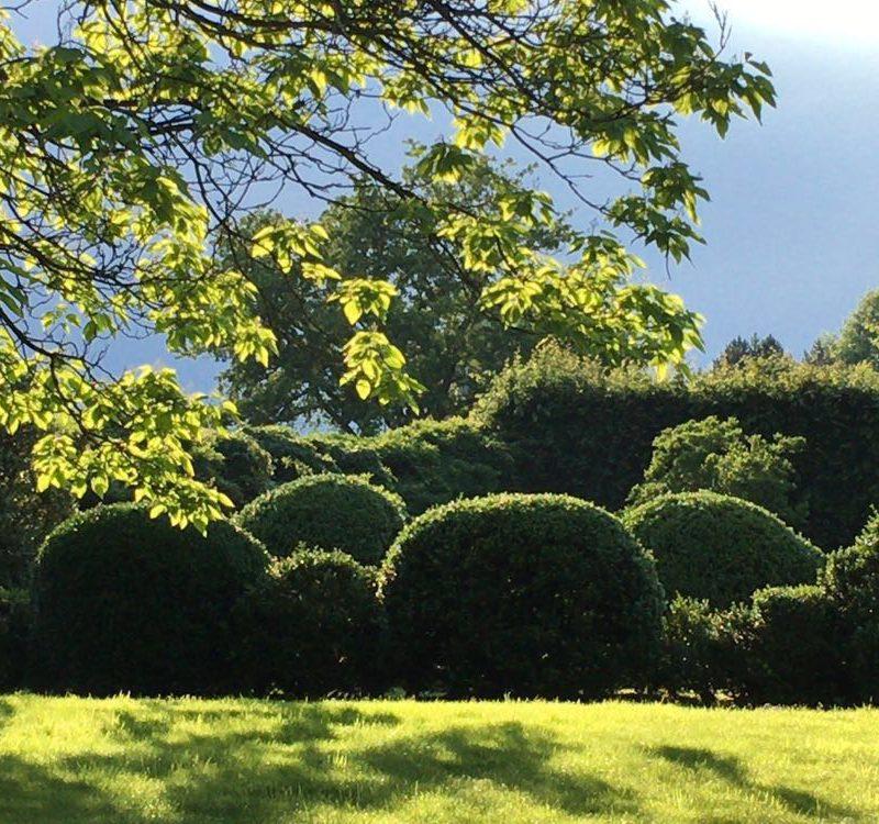 tuinonderhoud van geschoren hagen
