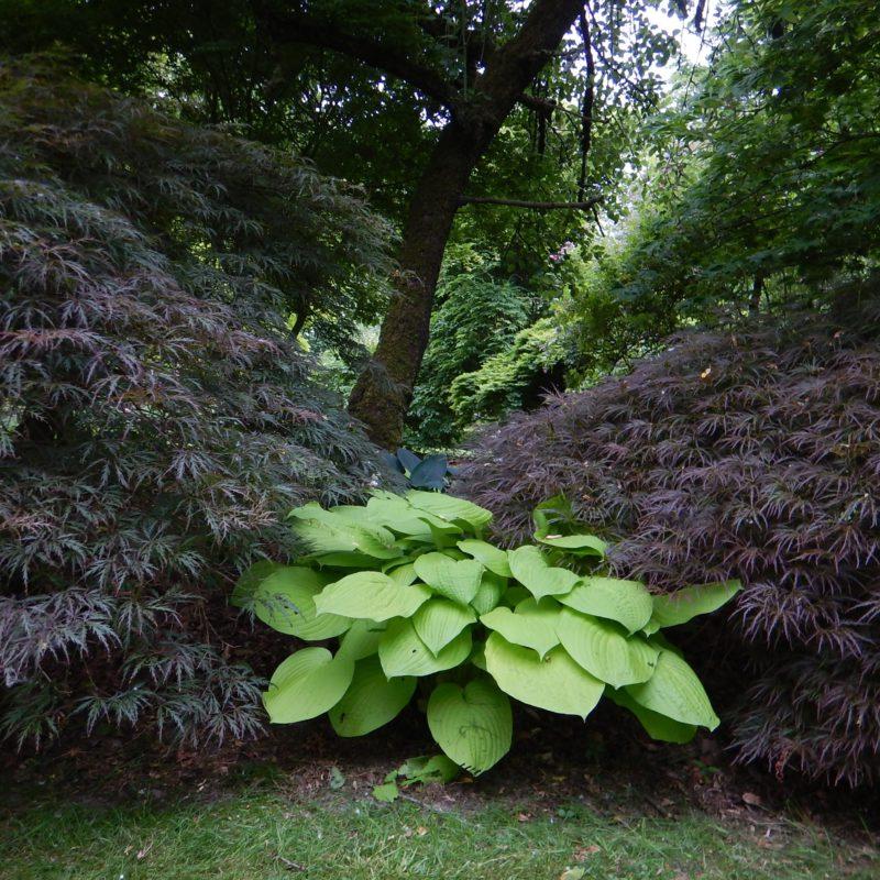 Aanplanten van planten door Hofheren