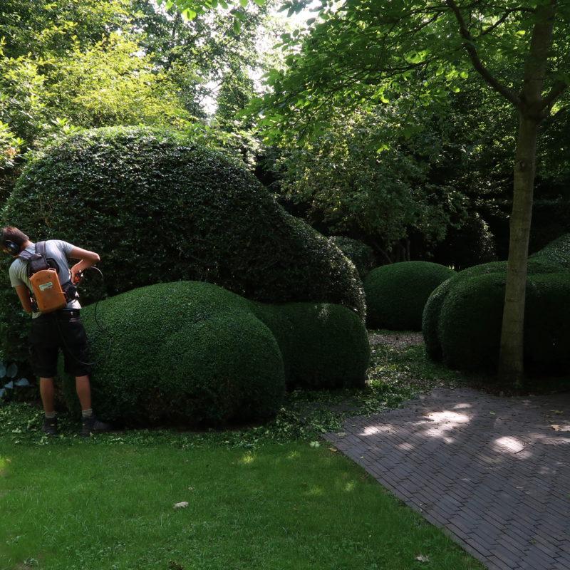 tuinonderhoud een man die een haag scheert