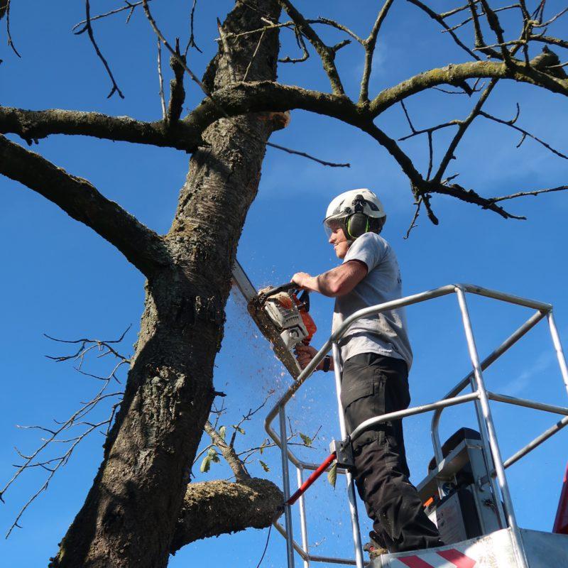 boomverzorger die bomen snoeit