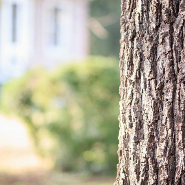 boomverzorging door de hofheren