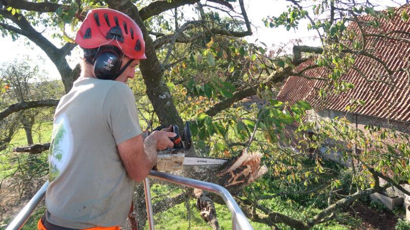 een boomverzorger die met een kettingzaag de boom snoeit